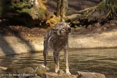 Zoo-Osnabrueck-250410-IMG_0653