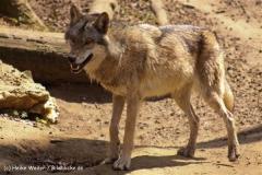 Zoo-Osnabrueck-250410-IMG_0672