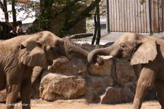 Zoo-Osnabrueck-250410-IMG_0899