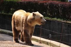 Zoo-Osnabrueck-250410-IMG_0908