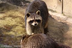 Zoo-Osnabrueck-250410-IMG_0970