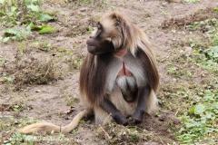 Zoo-Rheine-120909IMG_2187