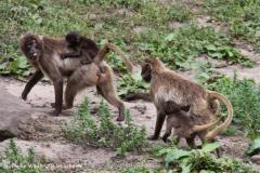 Zoo-Rheine-120909IMG_2222