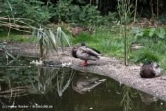 Zoo-Rheine-120909IMG_2240