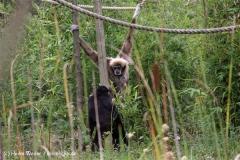 Zoo-Rheine-120909IMG_2322