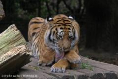 Zoo-Rheine-120909IMG_2349