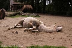 Zoo-Rheine-120909IMG_2491