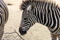 Zoo-Rheine-120909IMG_2504