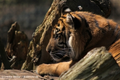 Zoo-Rheine-180410-IMG_20031