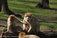 Zoo-Rheine-180410-IMG_20094