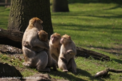 Zoo-Rheine-180410-IMG_20099
