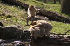 Zoo-Rheine-180410-IMG_20147
