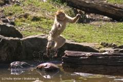 Zoo-Rheine-180410-IMG_20153