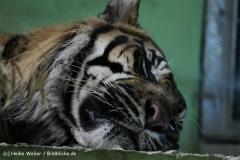 Zoo_Rheine_260712_IMG_8376