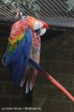 Zoo_Rheine_260712_IMG_8400