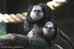 Zoo_Rheine_260712_IMG_8410
