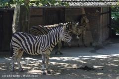 Zoo_Rheine_260712_IMG_8452