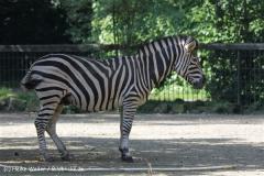 Zoo_Rheine_260712_IMG_8458