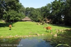 Zoo_Rheine_260712_IMG_8462_6218