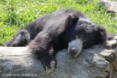 Zoo_Rheine_260712_IMG_8542