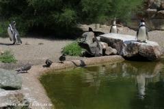 Zoo_Rheine_260712_IMG_8566