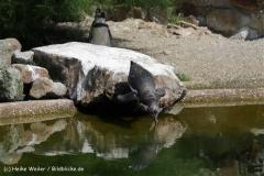 Zoo_Rheine_260712_IMG_8579
