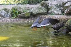 Zoo_Rheine_260712_IMG_8610