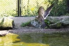 Zoo_Rheine_260712_IMG_8627