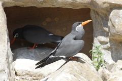 Zoo_Rheine_260712_IMG_8638