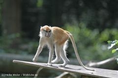 Zoo_Rostock_310712_085
