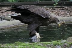 Zoo_Rostock_310712_116