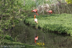 Zoo_Schwerin_100513_IMG_1422