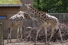 Zoo_Schwerin_100513_IMG_1426
