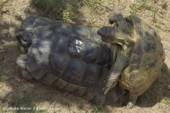 Zoo_Schwerin_100513_IMG_1431_1777