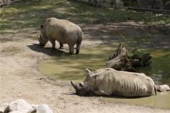 Zoo_Schwerin_100513_IMG_1443