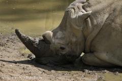 Zoo_Schwerin_100513_IMG_1444