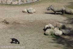 Zoo_Schwerin_100513_IMG_1444_1794