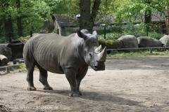 Zoo_Schwerin_100513_IMG_1448