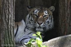 Zoo_Schwerin_100513_IMG_1457