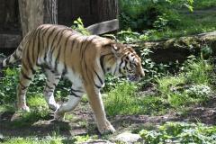 Zoo_Schwerin_100513_IMG_1461