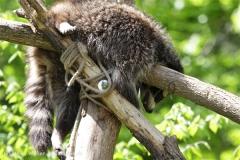 Zoo_Schwerin_100513_IMG_1466