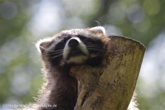 Zoo_Schwerin_100513_IMG_1470