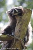 Zoo_Schwerin_100513_IMG_1471