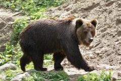 Zoo_Schwerin_100513_IMG_1478