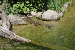 Zoo_Schwerin_100513_IMG_1488