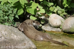 Zoo_Schwerin_100513_IMG_1491