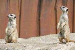 Zoo_Schwerin_100513_IMG_1501