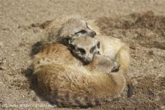 Zoo_Schwerin_100513_IMG_1503
