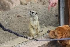 Zoo_Schwerin_100513_IMG_1508