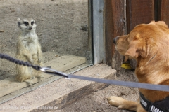 Zoo_Schwerin_100513_IMG_1509